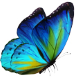 butterfly_COLOURED